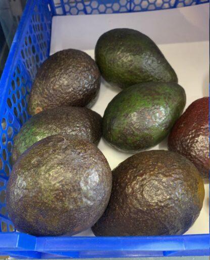 Avocado 1 st