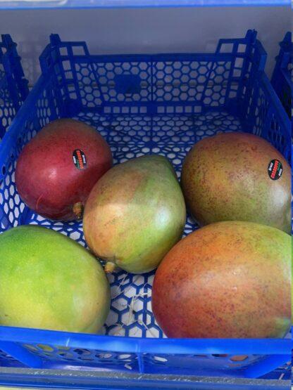 Mango 1 st